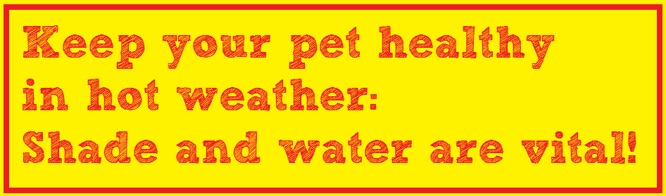 Cooling Dogs In Hot Weather